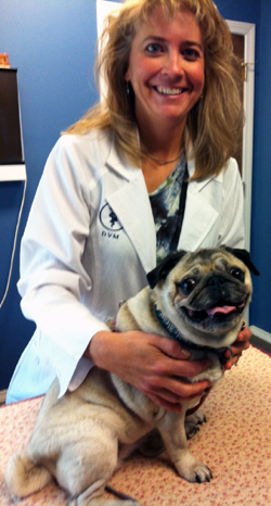 Angela Erickson, DVM and dog acupuncture patient, Wilma